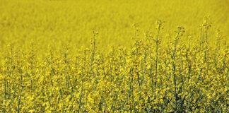 Wybór odpowiednio działających preparatów do ochrony roślin